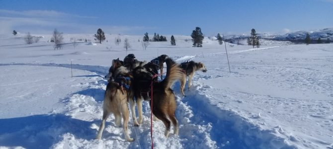 Snow Magic; Snow Hotel and Husky Sledge Ride, Kirkenes